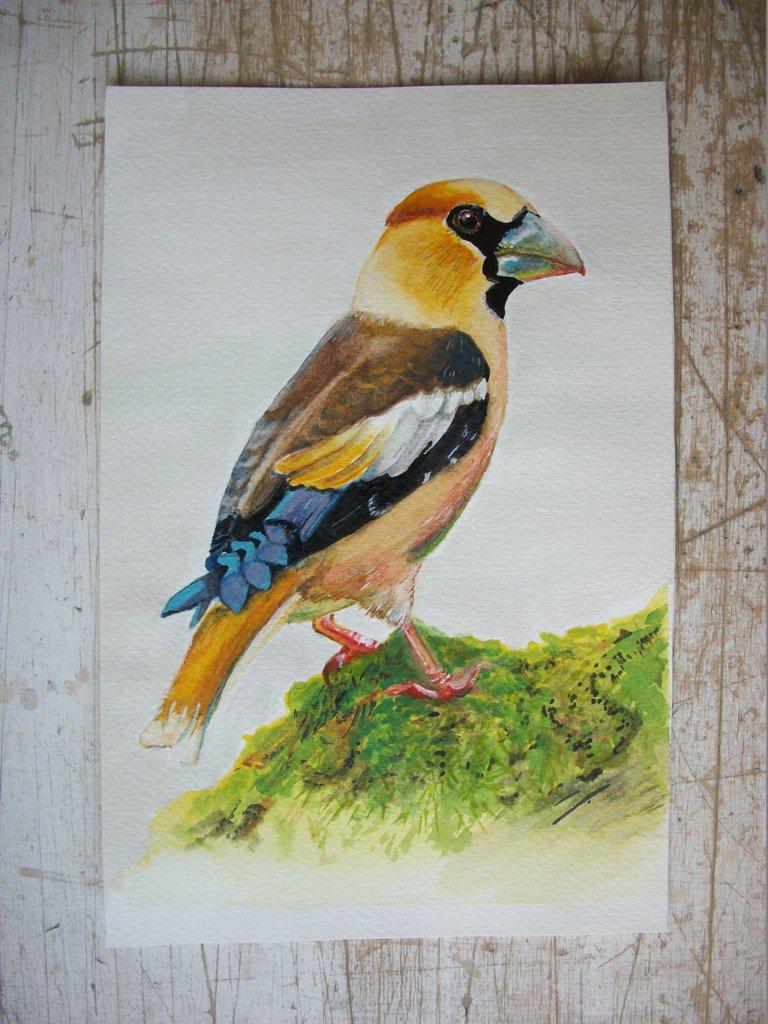 Uccello Frosone acquerello su carta, dipinto originale