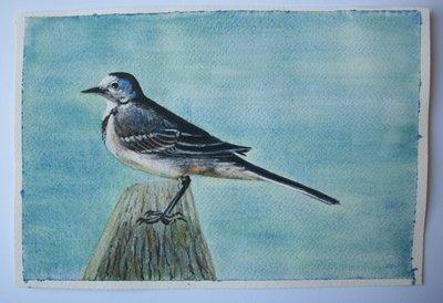 Uccello Ballerina bianca acquarello su carta dipinto originale