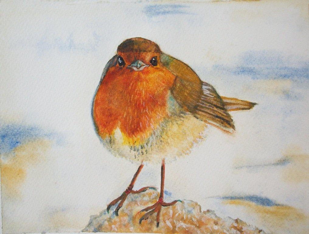 Uccello pettirosso acquarello su carta ruvida, dipinto originale
