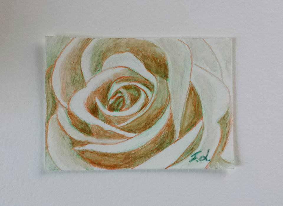 Aceo n. 19 - rosa