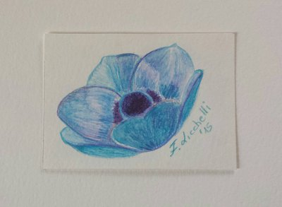 Aceo n. 24 - fiore turchese