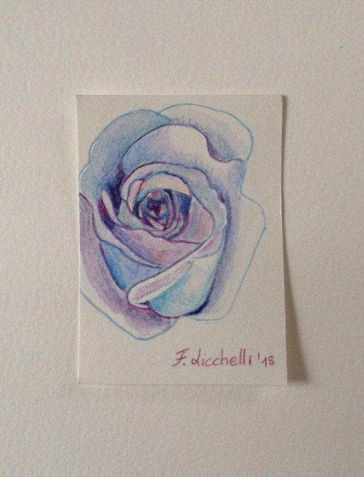 Aceo n. 25 - rosa blu
