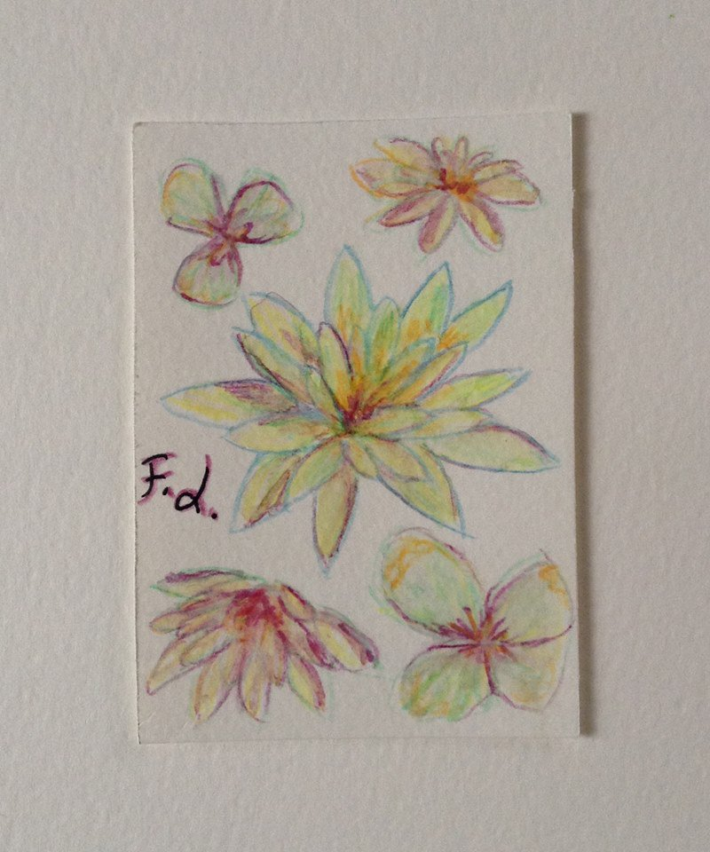 Carta della Gratitudine n. 27 - fiori gialli