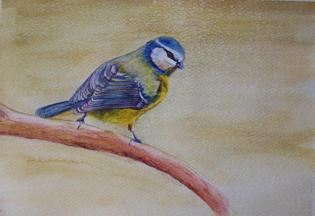 Uccello acquerello su carta, dipinto originale