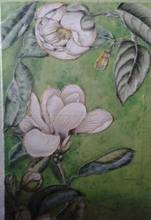 magnolie e sole