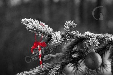 Addobbo Natale: candy cane. Decoro per Albero o pacchetto regalo
