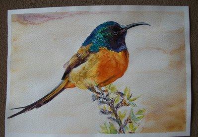 Uccello Colibrì acquerello, dipinto originale /Bird hummingbird watercolor, original painting