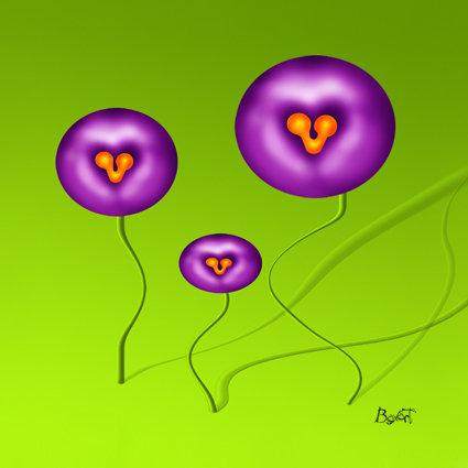 I fiori caramella in famiglia