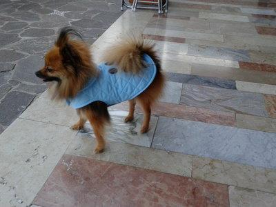 Cappottino  azzurro foderato in pile per cane fatti a mano