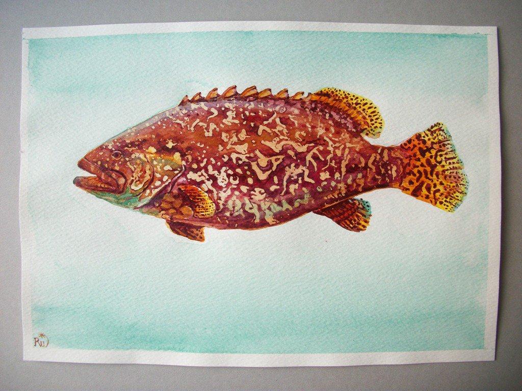 pesce cernia, acquerello, dipinto originale / grouper fish, watercolor, original painting