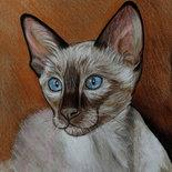 Ritratto gatto siamese pastelli e acrilico su cartoncino