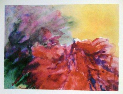 anemoni e mimose
