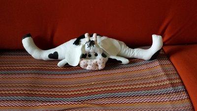 Allegra mucca paraspifferi