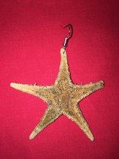 Orecchino stella marina