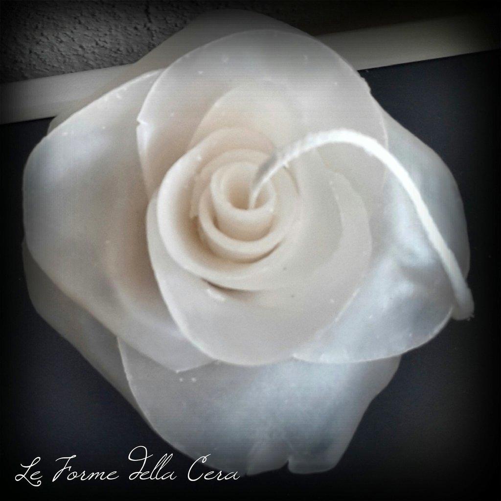 Rosa di cera