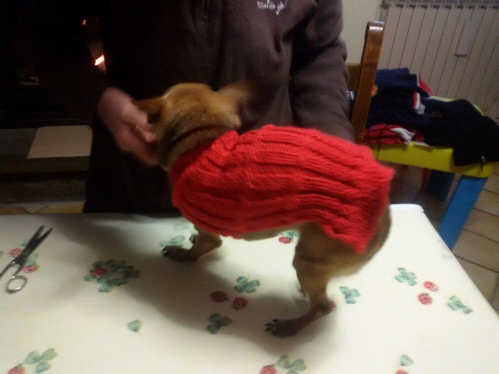 Pullover per cane piccolo