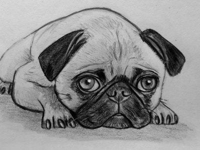 Ritratto disegno schizzo cane carlino matita su carta