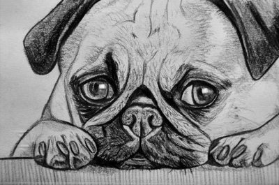 Ritratto su commissione animali cane gatto da foto matita idea regalo