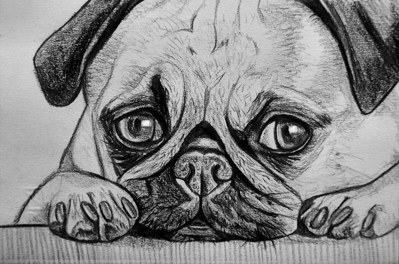 Favorito Ritratto su commissione animali cane gatto da foto matita idea  VM58