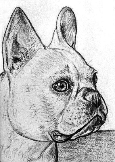 Ritratto su commissione animali cane gatto da foto matita for Disegni a matita di cani
