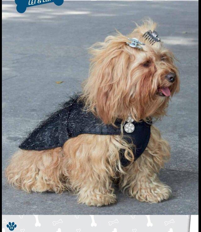 Vestito cane sera lei