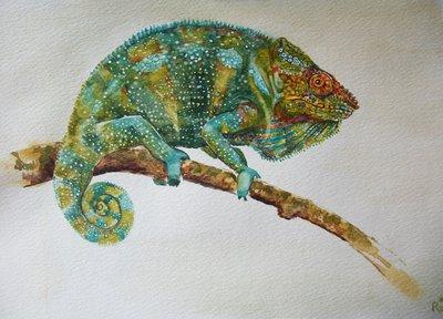 animali: camaleonte acquerello, dipinto originale / chameleon watercolor, original painting