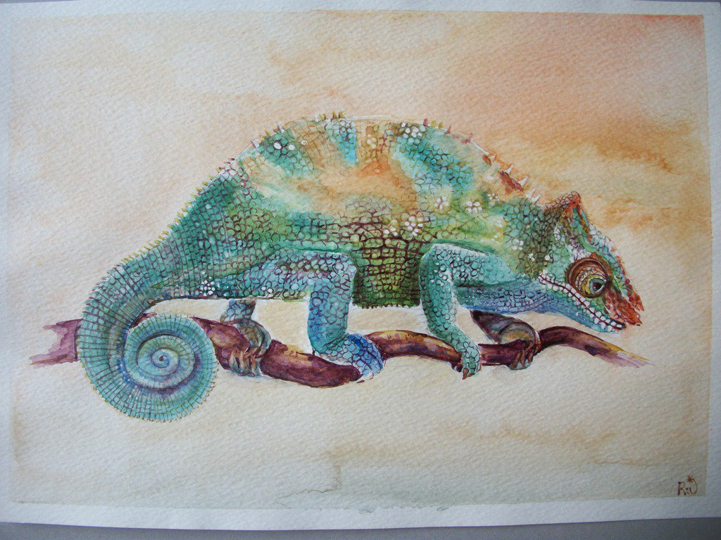 animali: camaleonte acquerello, dipinto originale / chameleon watercolor, original painting