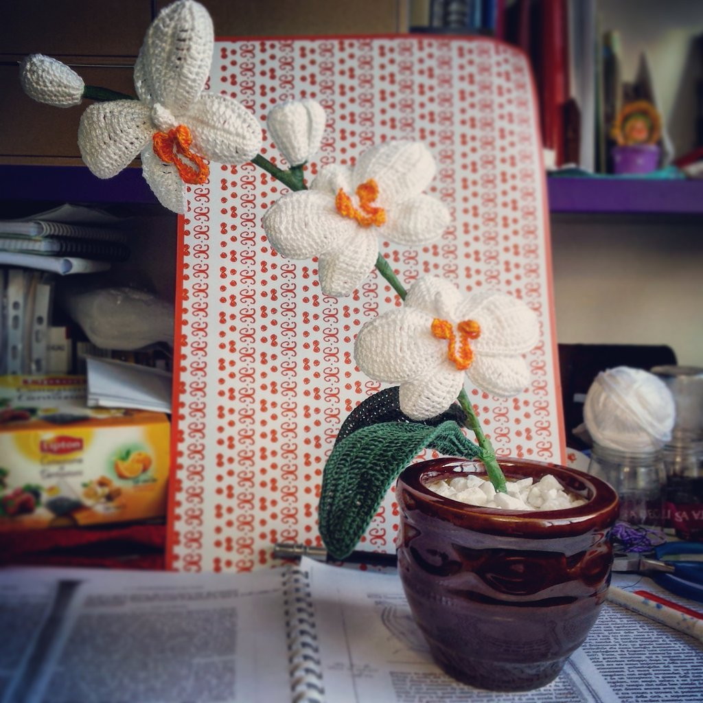 "Orchidea bianca ""Smirne"""