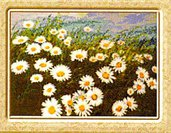 Daisies - Margherite - Schema Ricamo Punto Croce - Character Creations