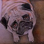 Ritratto pastelli su cartoncino cane carlino .