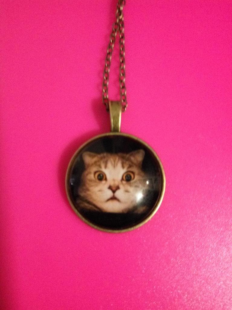Linea Cats - Cosmo
