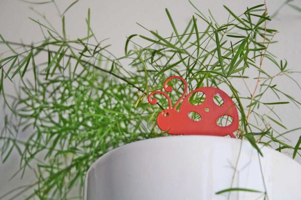 COCCINELLA 3D - Allegro design Spikey. Decorazione d'arredo d'esterni e d'interni