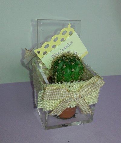 Bomboniera battesimo confezionamento pianta grassa