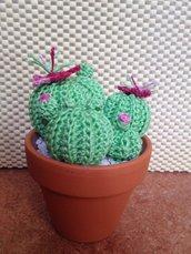 Cactus tondo medio