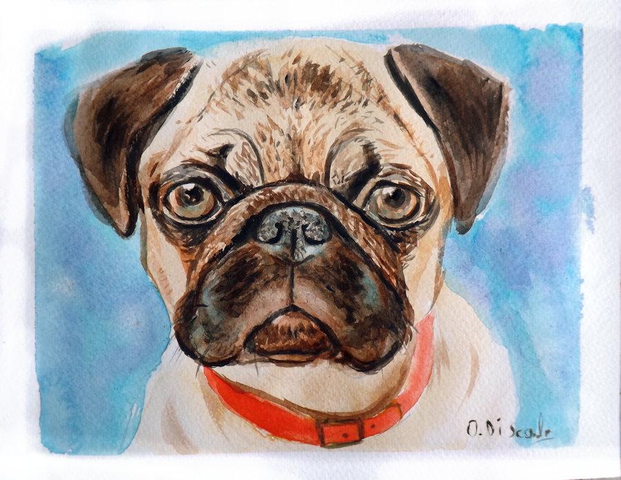 Ritratto acquerello cane carlino dipinto a mano