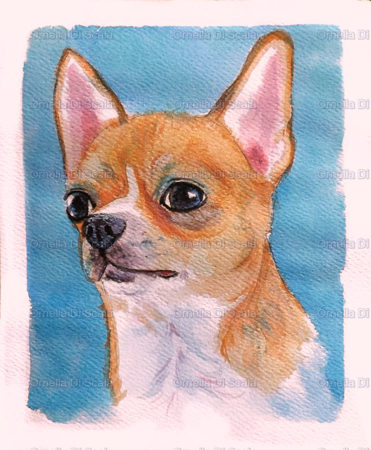 Ritratto acquerello cane chihuahua dipinto a mano