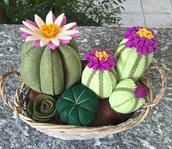 Composizione di cactus di feltro in cestino di vimini
