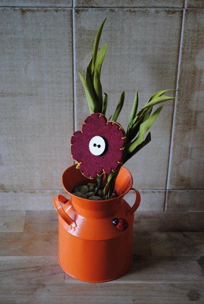 margherita in vaso arancione