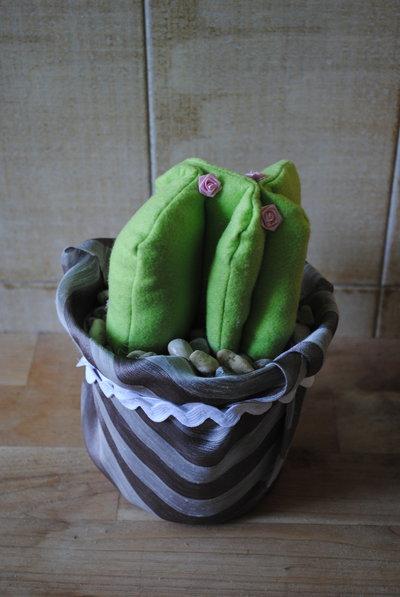 cactus con roselline