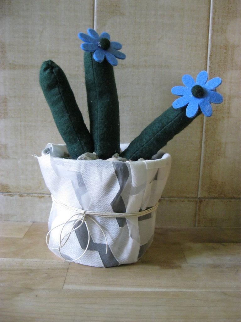 cactus con fiore azzurro