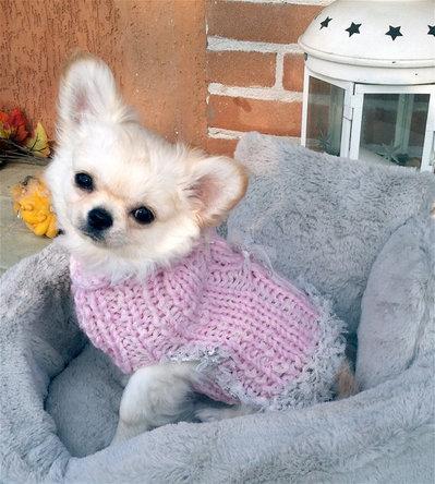 Taglia XS Romantico ed elegante maglione per chihuahua per cuccioli, chihuahua e piccoli cani Cappotto rosa per chihuahua Maglione rosa per Chihuahua fatto a mano Taglia XS