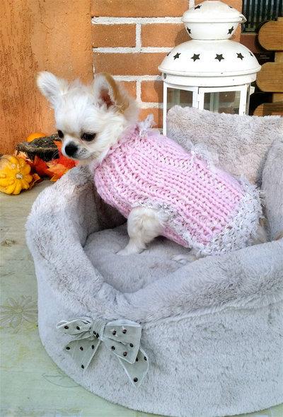 Taglia S maglione per chihuahua cappotto per cuccioli chihuahua e piccoli cani Romantico ed elegante Cappotto rosa per chihuahua fatto a mano