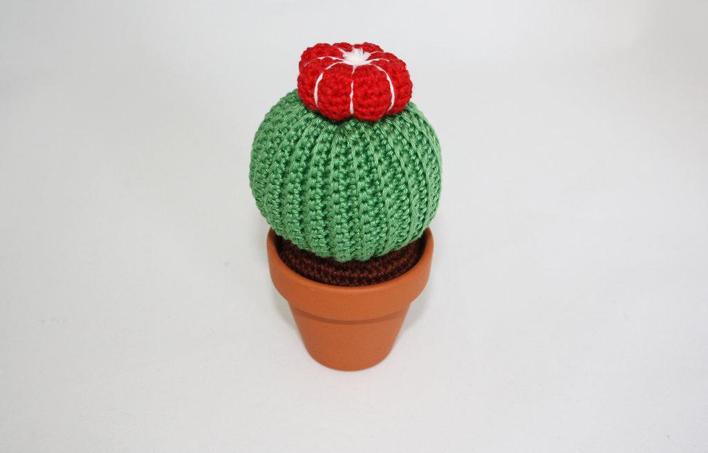 Cactus a palla con fiore rosso