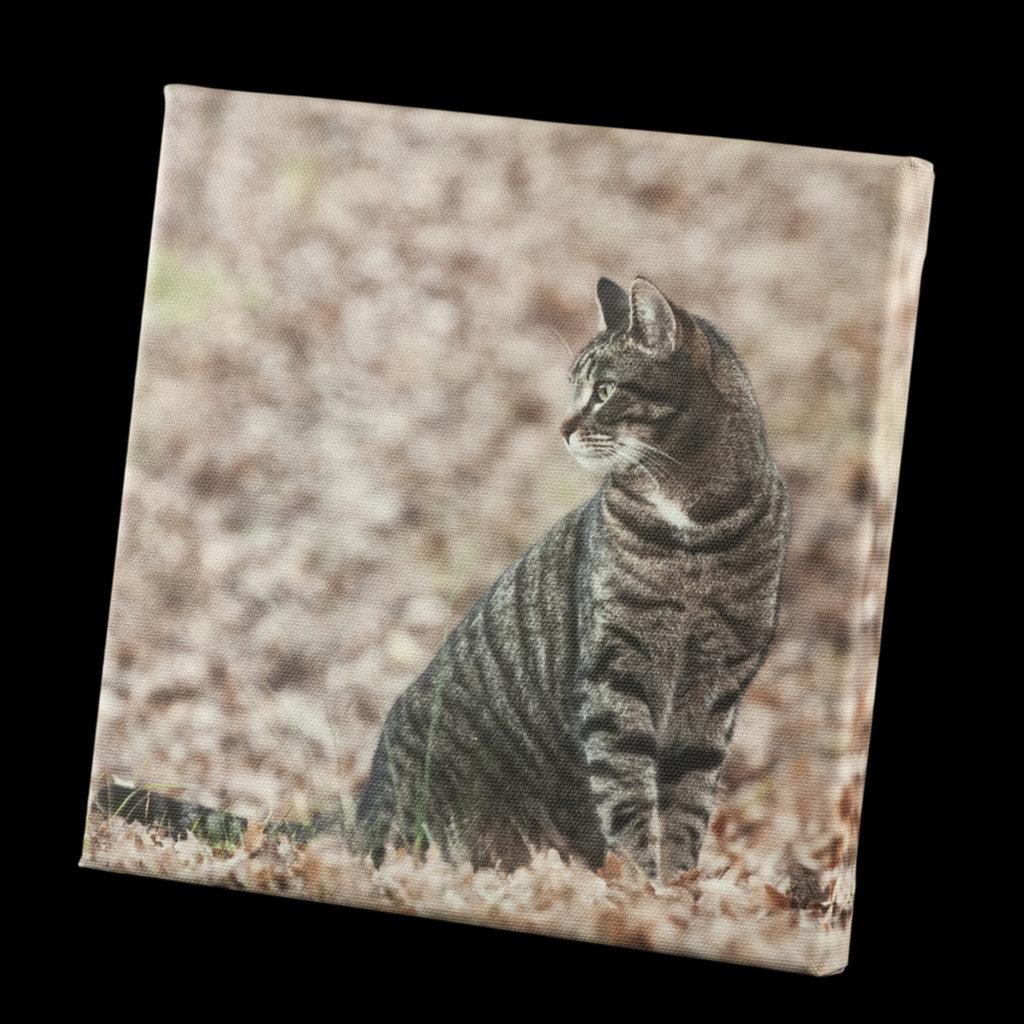 STAMPA SU TELA ALTA QUALITÀ - AUTUMN CAT - STAMPA ARREDO - TELA 20 X 20