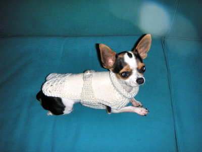 cappottino per chihuahua o piccoli cani