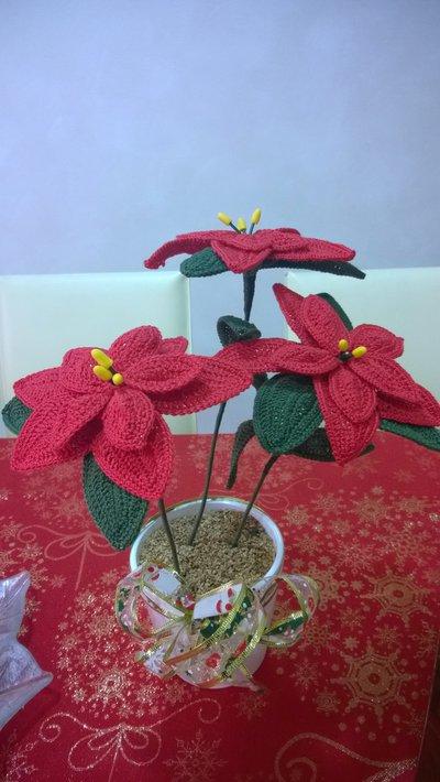 vasetto con stelle di Natale