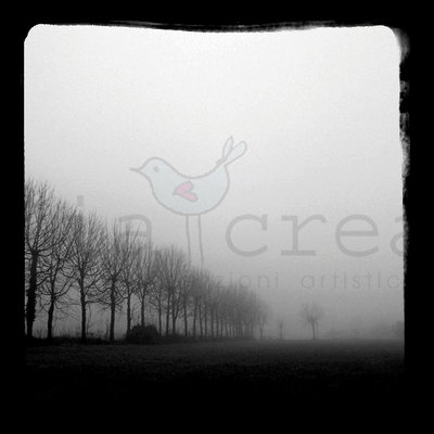 Fotografie bianco e nero - autunno in campagna veneta