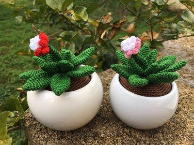 Cactus amigurumi con fiore colorato