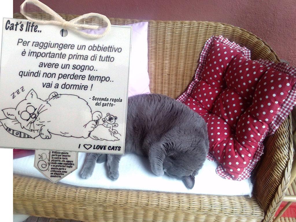 Biglietto d'auguri fatto a mano : Seconda regola del gatto..