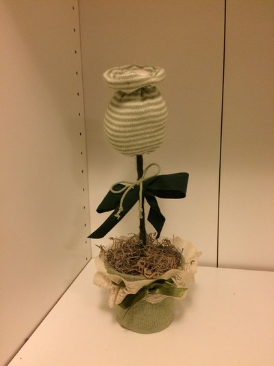 Tulipano in vaso